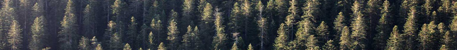 cropped-ForêtMontagne-modif